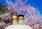 """春尚好,燕京八景之一""""琼岛春阴""""都有哪些看头?值此时节去就正好"""