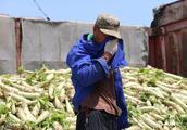 农村新型骗局,不少的农民都被骗了,尤其这种骗局最可恨