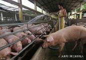 非洲猪瘟的影响,今年冬天猪肉价格能否上涨至20元/斤
