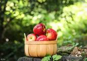 苹果期货空头如约而至,但是苹果只是一个代码,如何建立交易系统