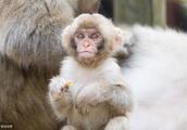68年生肖猴,19年时来运转,得饶人处且饶人,争执无益于自己!
