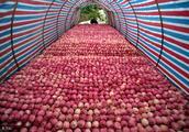 比果农卖不掉苹果更可怕的事情是意识不到!