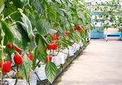 高效蔬菜种植避免踩雷,避免做农业小白