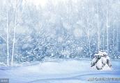 上联:冬花飘似羽,请对下联