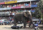 印尼的街头出现大象,在街头焦躁不安的暴走,最后用吊车送走了