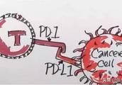 #青云计划#手撕抗癌神药PD-1,疗效有多强,副作用就可能有多大