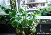 夏天家里种这几种花草,越浇水长的越旺