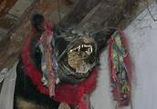 那些死后背塞满稻草悬挂在房梁上的藏獒,是藏人对藏獒最大的敬畏