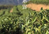 茶友话题:网上买的新茶都是假的,次的,怎么存?