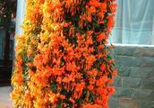 变废为宝!用这个垃圾养花,根壮叶茂不说,还特别容易开花!
