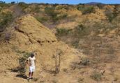 2亿个土堆,100亿立方米,巴西白蚁丘规模之大,在太空都能看见!