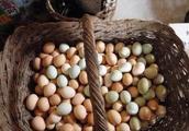 为什么农村土鸡下的蛋大小不一样呢?
