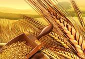 全球一半小麦库存在中国 供应趋紧俄罗斯计划限制小麦出口步伐