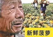 """农产品存在""""滞销"""",农民都哭了,快来帮帮我们吧,这是真的吗?"""