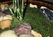 养文竹,这样配土,文竹不停爆芽,绿油油