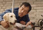 这条拉布拉多犬特别聪明能听懂主人的话,看完很想养一条!