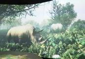 3D视频显示远古时代的自然环境,真实,解手可摸