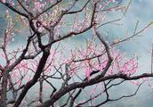 福建深山暗藏一座桃花岛,十里桃花就在身边,再也不要去浙江了