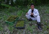 日本奇特的苔藓文化:有人收集成瘾,有人专攻销售年入千万
