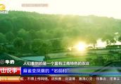 """麻雀变凤凰的""""岩前村"""":从""""空心村""""江南""""网红村""""的华丽蜕变"""