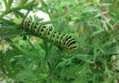 昆蟲對人類的危害有哪些