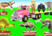趣味益智学习:小动物去恐龙博物馆参观