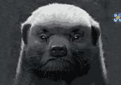 """马云钦点""""平头哥""""上位 阿里动物园来了个""""肉食动物"""""""