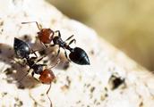 快速清除蚂蚁,教你一个实用办法,家里再也看不见一只蚂蚁
