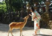 身为日本国宝的奈良鹿为何频频咬人,伤人事件仍在增加
