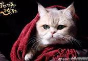 教你如何吸猫!《我在大理寺当宠物》成甜宠养成记