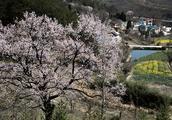 大别山区有个古朴而秀美的地方,借问此地在何处,牧童遥指杏花村