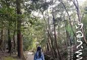 京都,很高兴在冬天认识你 枣子的京都禅庭游记(一)