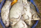 秋天钓鲫鱼和鲤鱼,学会这些选钓位技巧,不愁钓不到鱼
