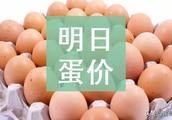 明日(2月20日)鸡蛋价格预测