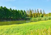太猖狂!非法围垦700多亩湿地,环保问题上不讲法治就是不讲政治