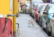 如何开办宠物狗养殖场
