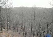 山西沁源6森林消防员牺牲:引发火灾者为二级精神残疾