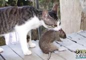 搞笑四川方言:真人版猫和老鼠,配上搞笑四川话,看完开心又解压