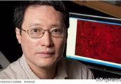 华裔教授学术造假 遭美国大学开除