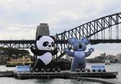 澳大利亚保健品在华销售严重受阻!生产商抗议澳大利亚盲目站队?