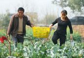 """长满农村无人要的""""野果"""",农民们成片种植,常吃脑梗不来扰!"""