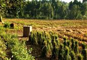 农村的稻田,其实也不乏风景。