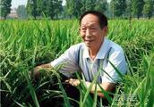 华为宣布与袁隆平合作,助力15亿亩盐碱地改造成良田