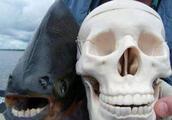 喜欢袭击裆部的人齿鱼,只对男子蛋蛋感兴趣,俗称切蛋鱼
