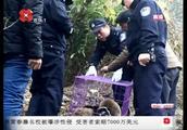 父子为谋取私利,在秦岭山里捕猎野生动物,目前被警方查获