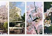 最新!杭城校园赏樱地图来了!有你的学校吗