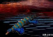远古怪兽化石,在中国湖北被发现,头部像鸭嘴兽,躯干却像鱼龙