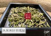 再怎么喜欢春茶,干度不达标的白茶也不能买!