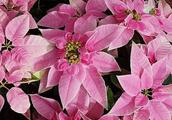 """家里这4种""""药片""""过期不要扔,用来养花,比花肥好10倍"""