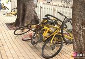 """「创文进行时」共享单车变""""共享垃圾"""",文明停放是否很难?"""